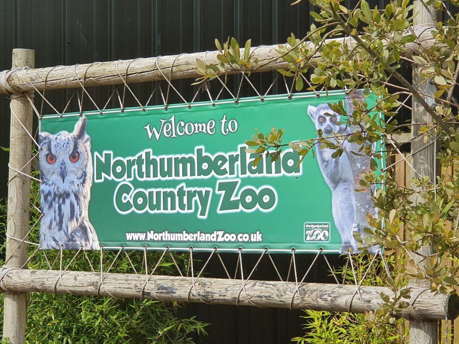 Culture Trip 39- Northumberland Country Zoo